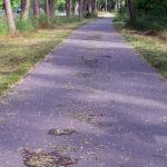 Verschmutzter Radweg nach der Mahd.