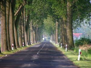 Die Oderstraße zu besseren Zeiten.